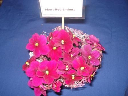 African Violet Akers